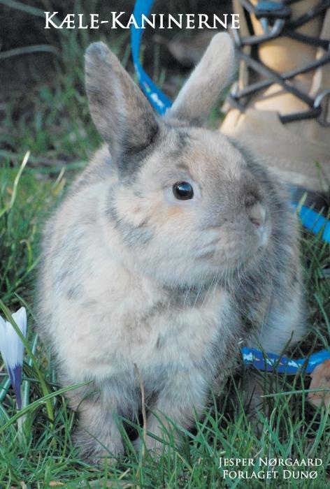 Image of   Kæle-kaninerne (E-bog)