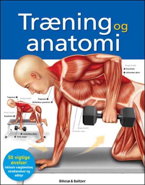 Træning og anatomi