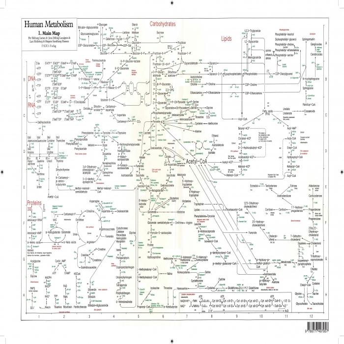Human Metabolism - PLAKAT (Bog)